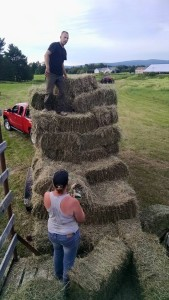 stacking hay