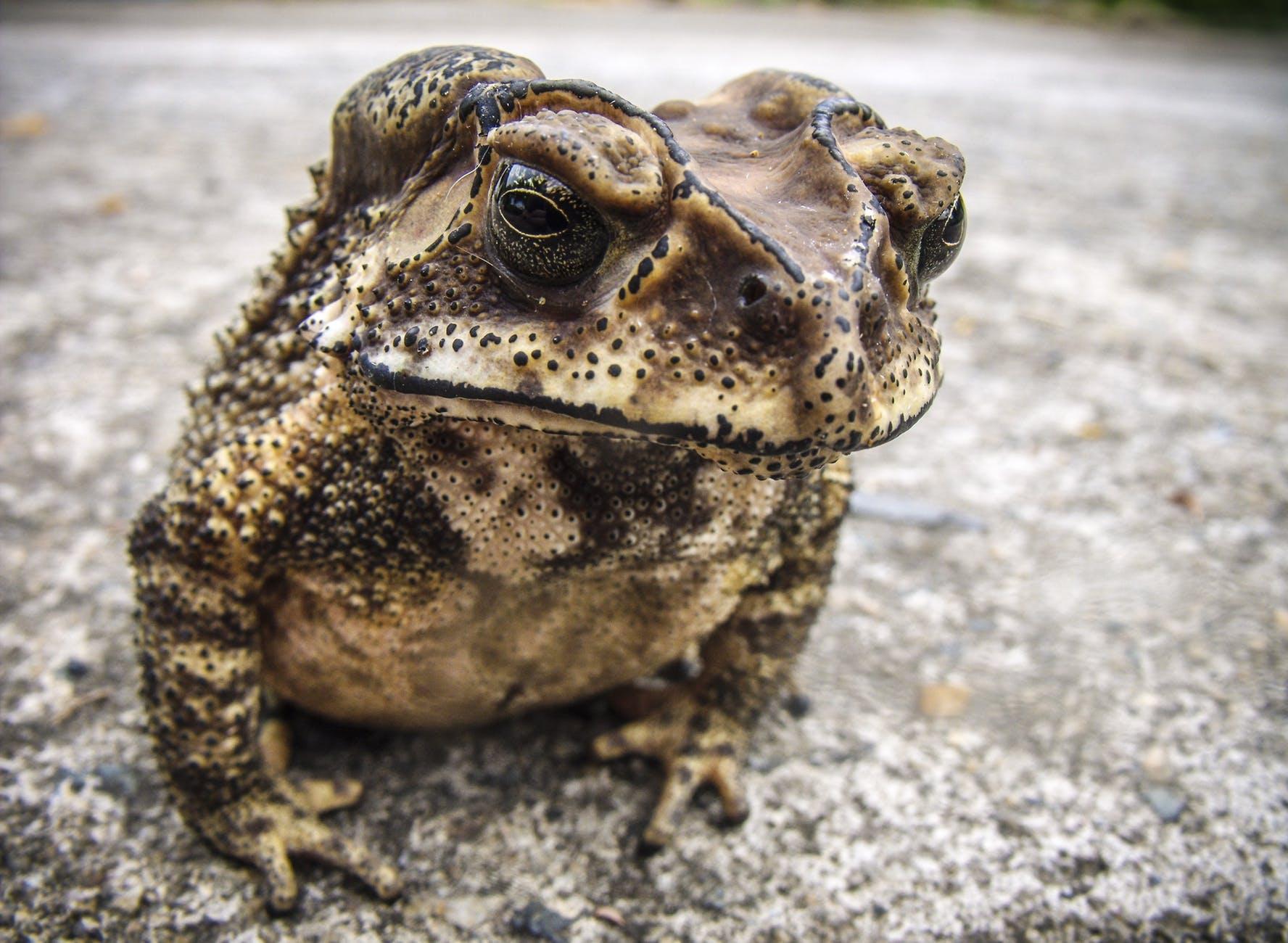 frog toad urmonster