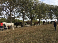 Horseback Riding in Maison Laffitte